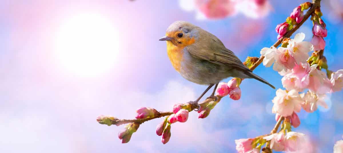 Help Wild Birds Around The Summerhouse