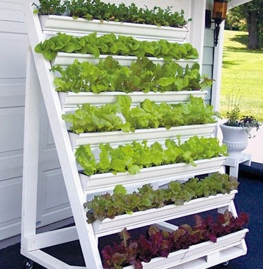 How to Create a Vertical Garden at Home